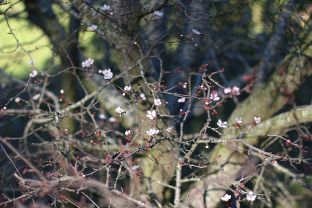novato-small-pink-flowers
