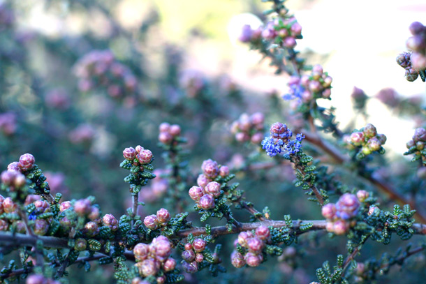 novato-strange-flowers-berries