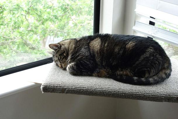 Cat loaf baking