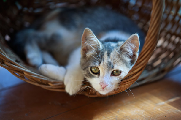 Independent, sweet cat