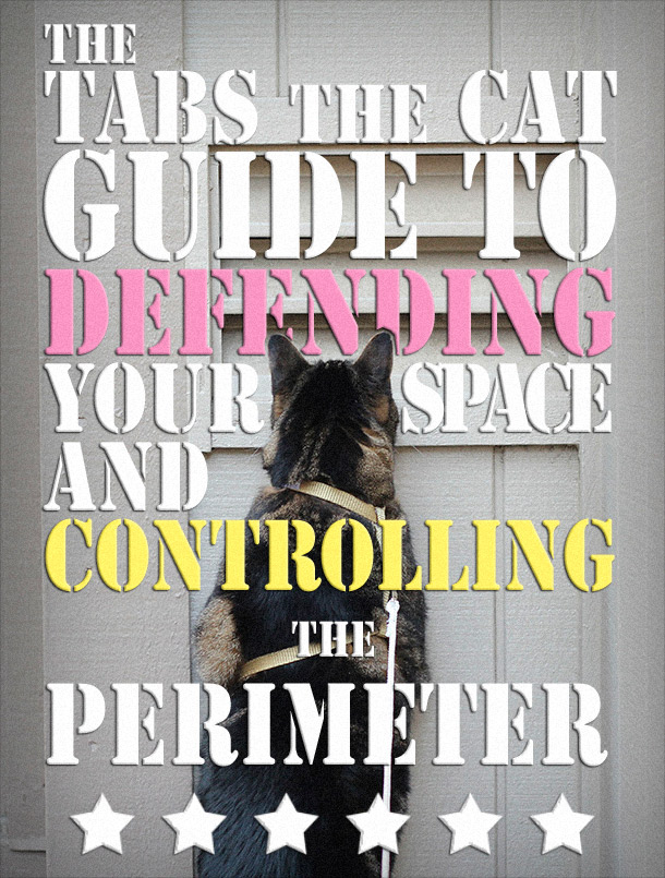 The Tabs the Cat Guide to Defending Your Space
