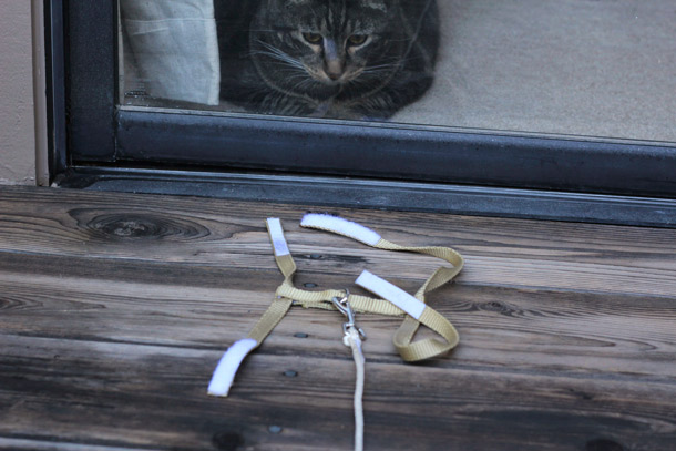 Build your own cat leash