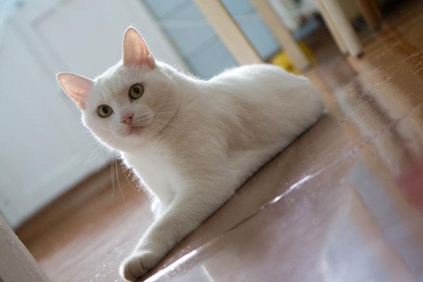 Apartment cat living