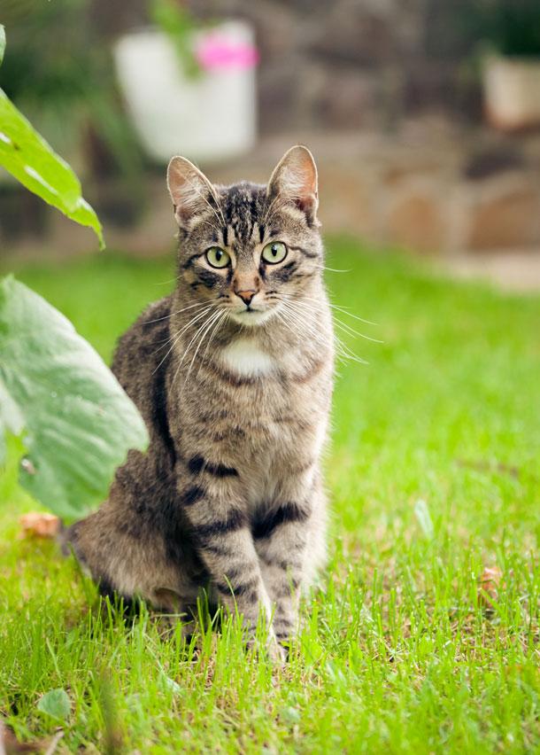 Cat entrepreneur