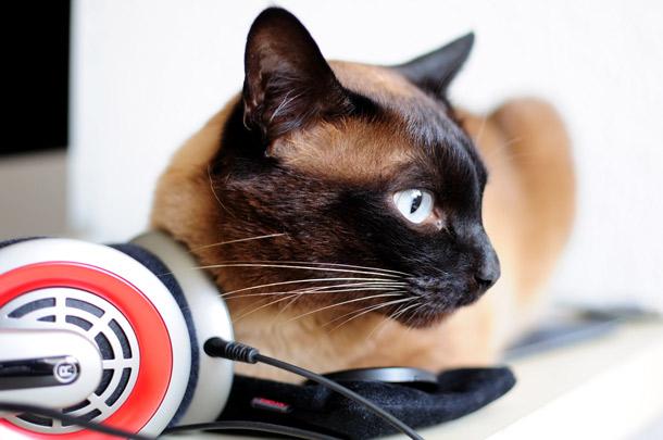 Cat likes audio books