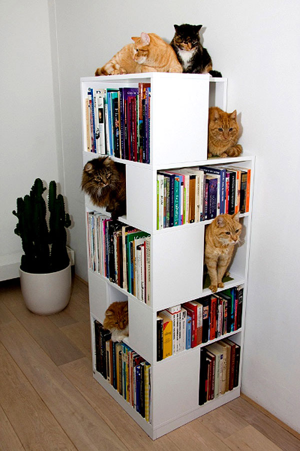cat bookcase