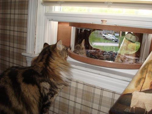 coveside panoramic bird feeder