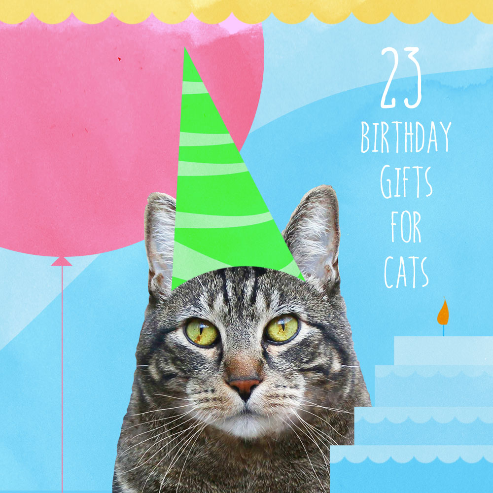 Birthday gifts for cats