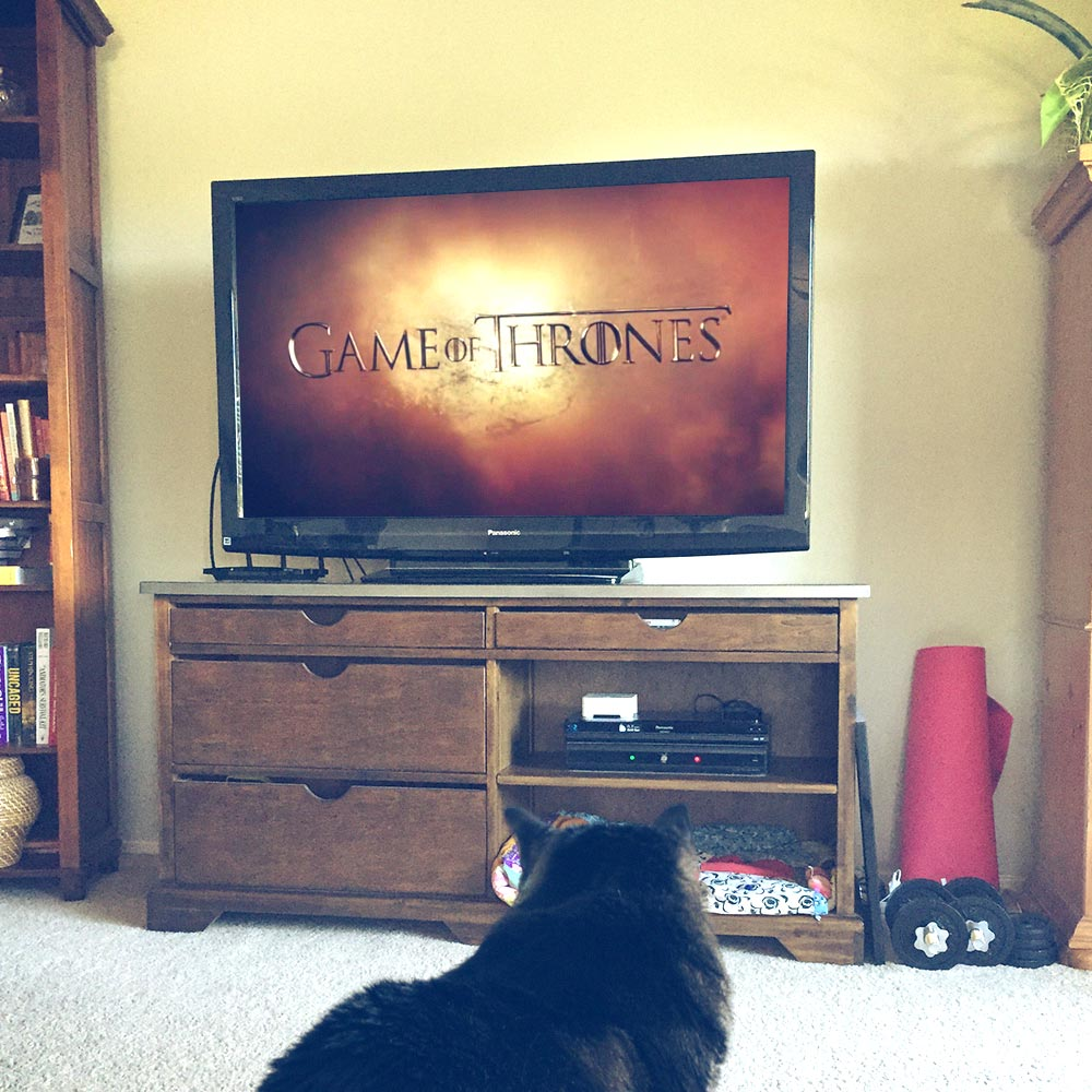 cat-game-of-thrones