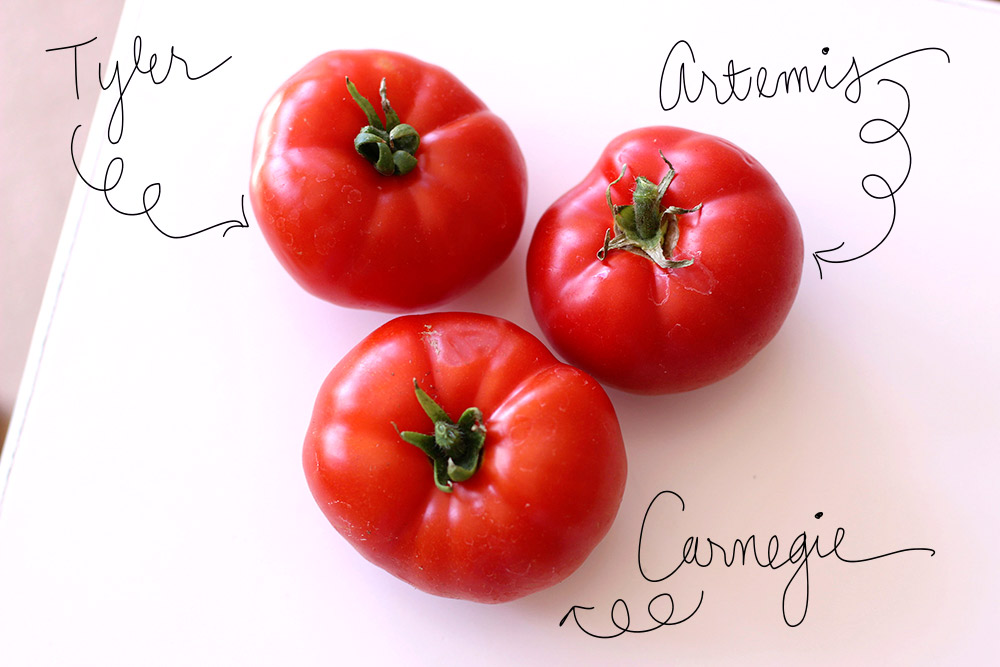 first tomatoes 1-final