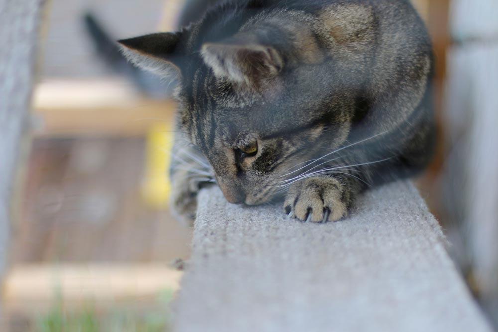 tabs-the-cat-june-2015-5