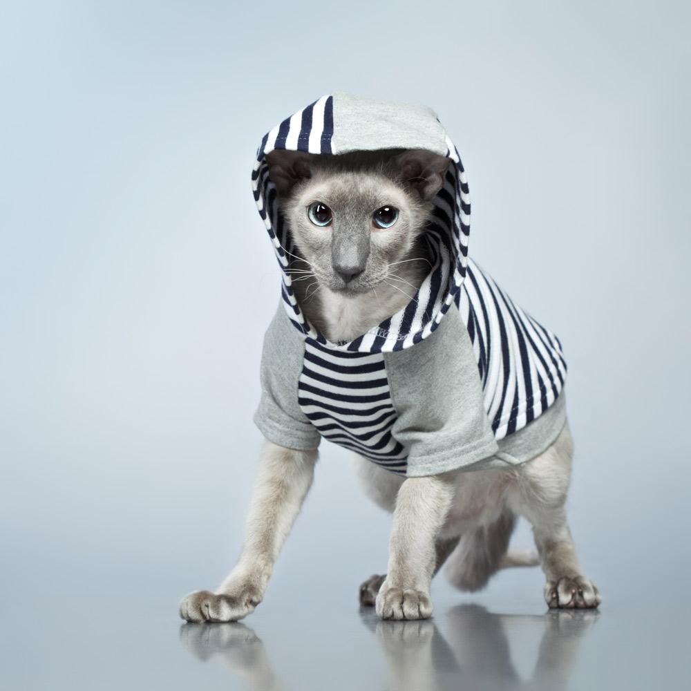 cat-hoodie-style