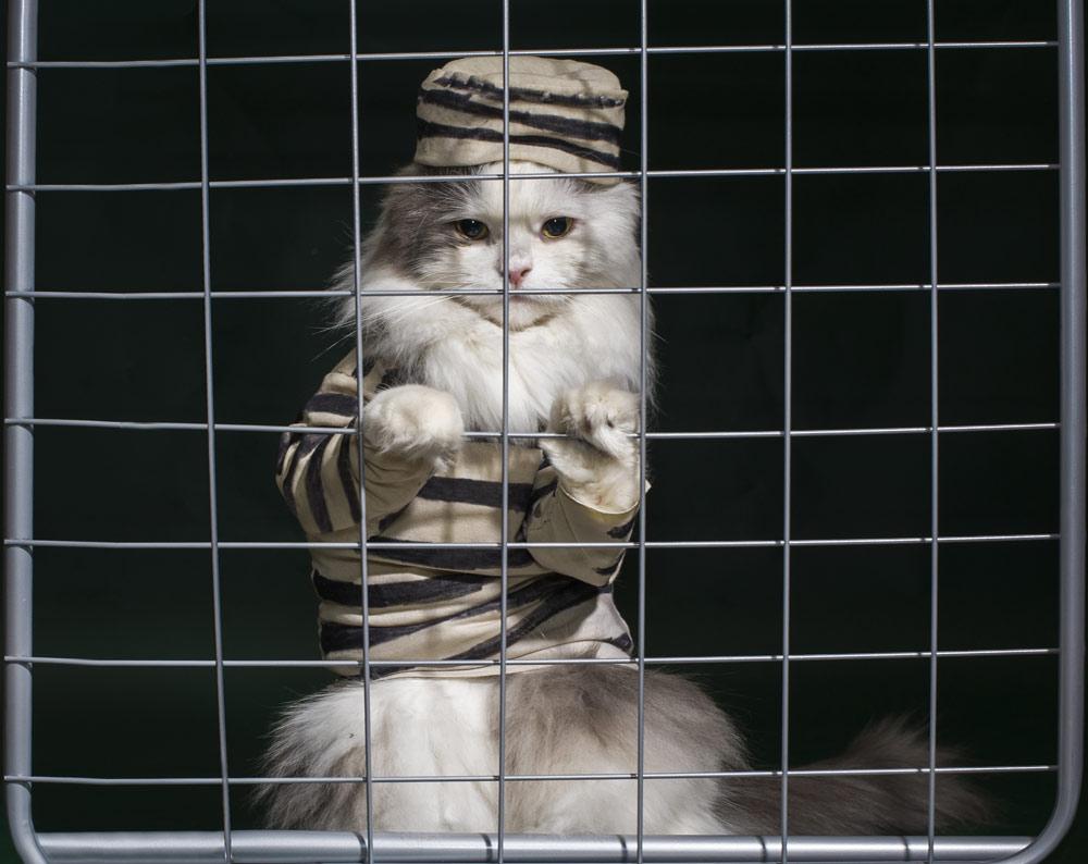 cat-jail