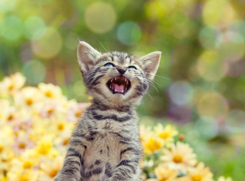 kitten-singing