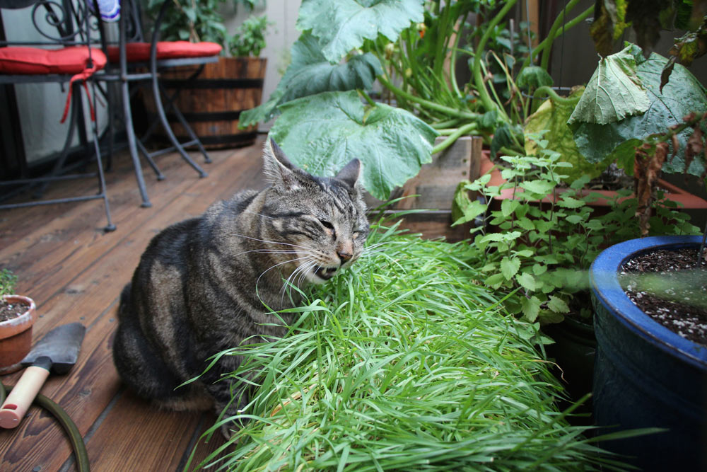 tabs-the-cat-summer-2015-11
