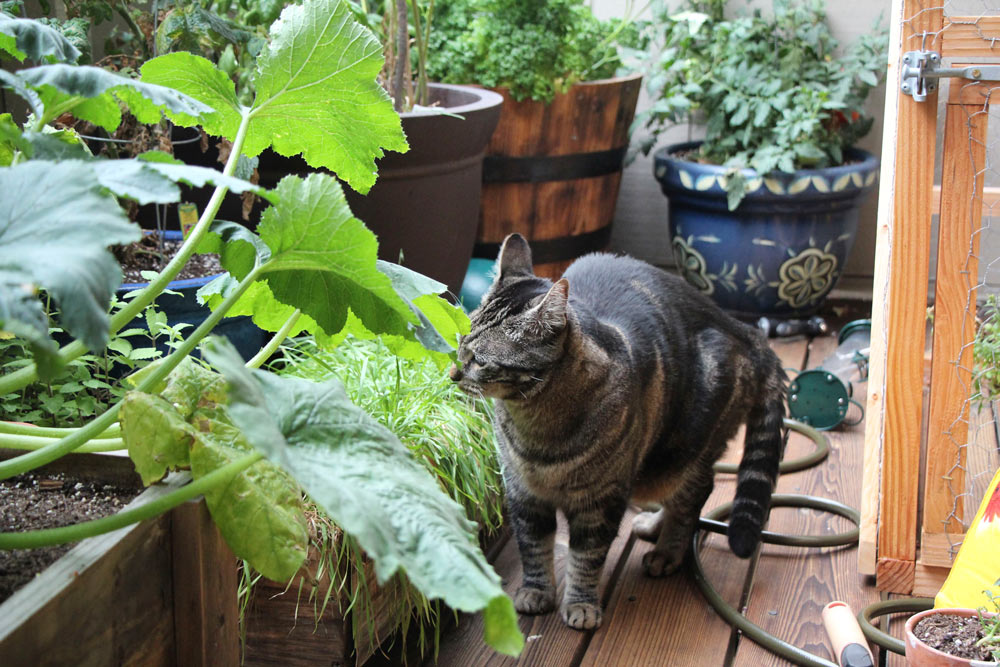 tabs-the-cat-summer-2015-14