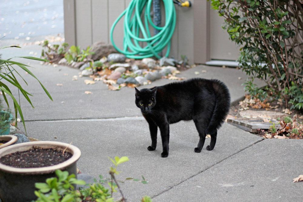 10-tabs-cat-summer-2015