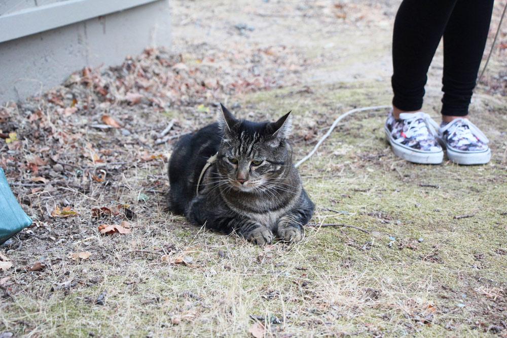 11-tabs-cat-model