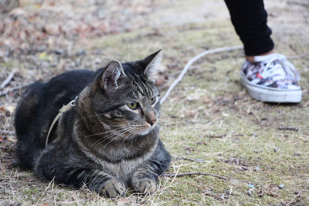 12-tabs-cat-model