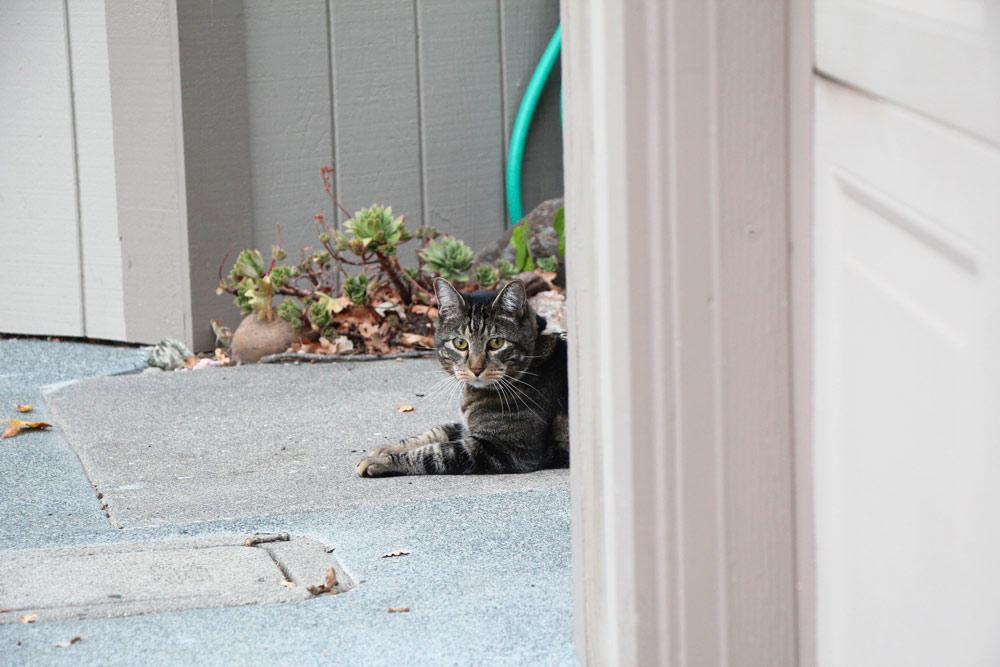 18-tabs-cat-model