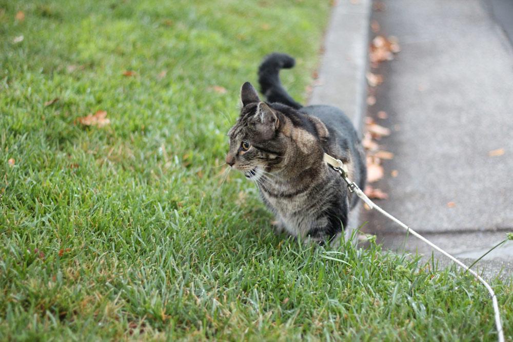 4-tabs-cat-summer-2015
