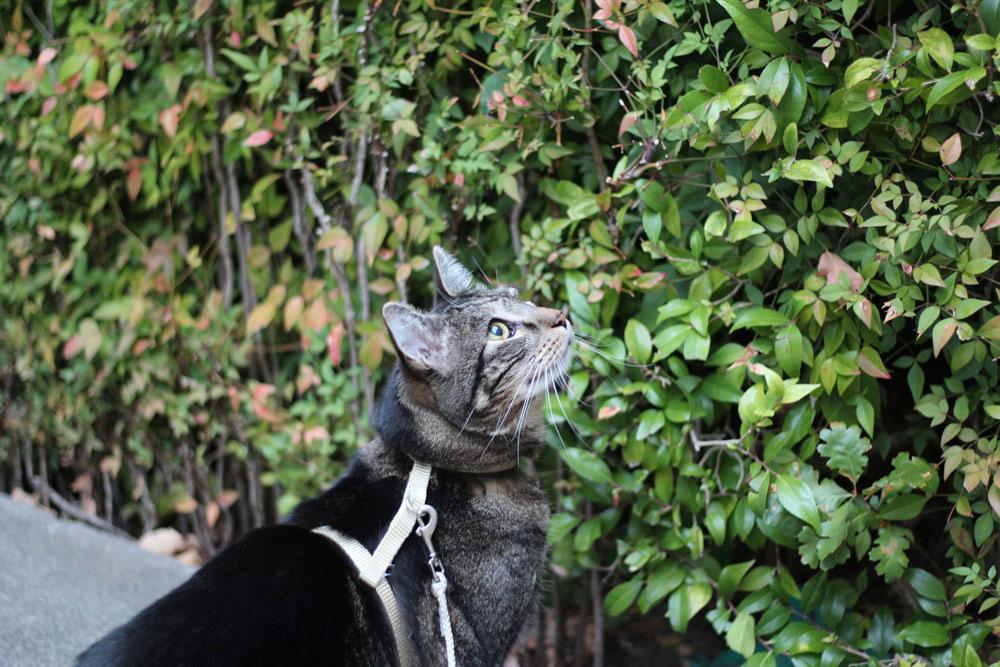 6-tabs-cat-summer-2015
