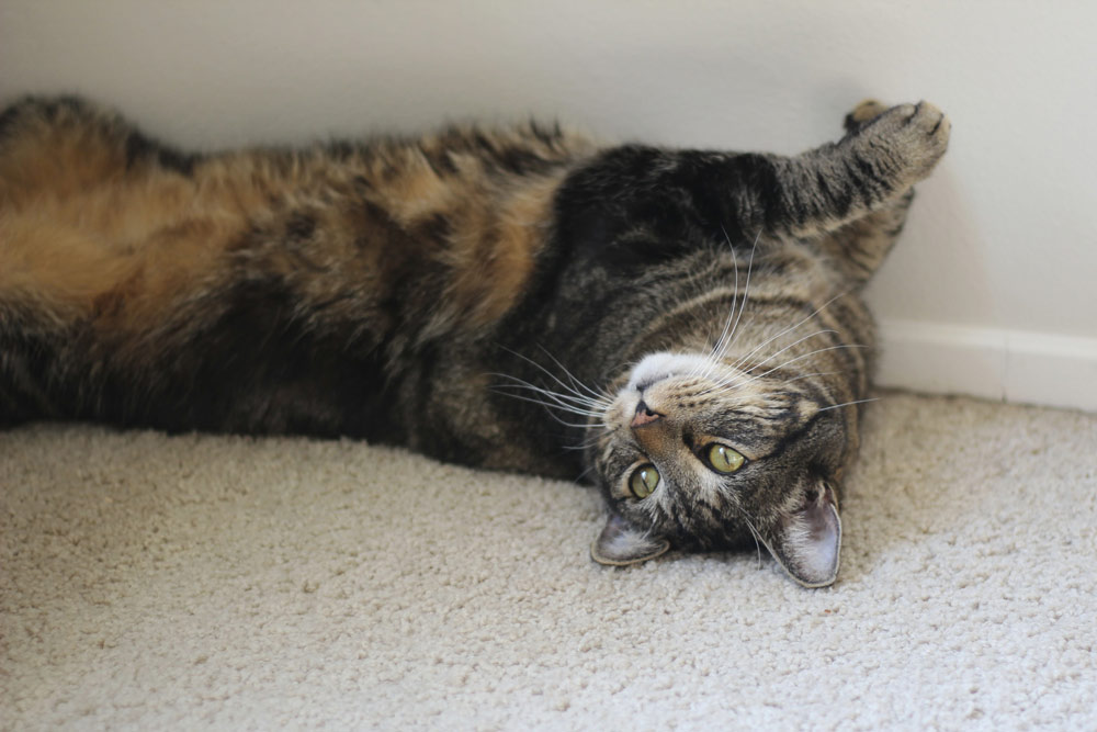 6-tabs-cat-supermodel