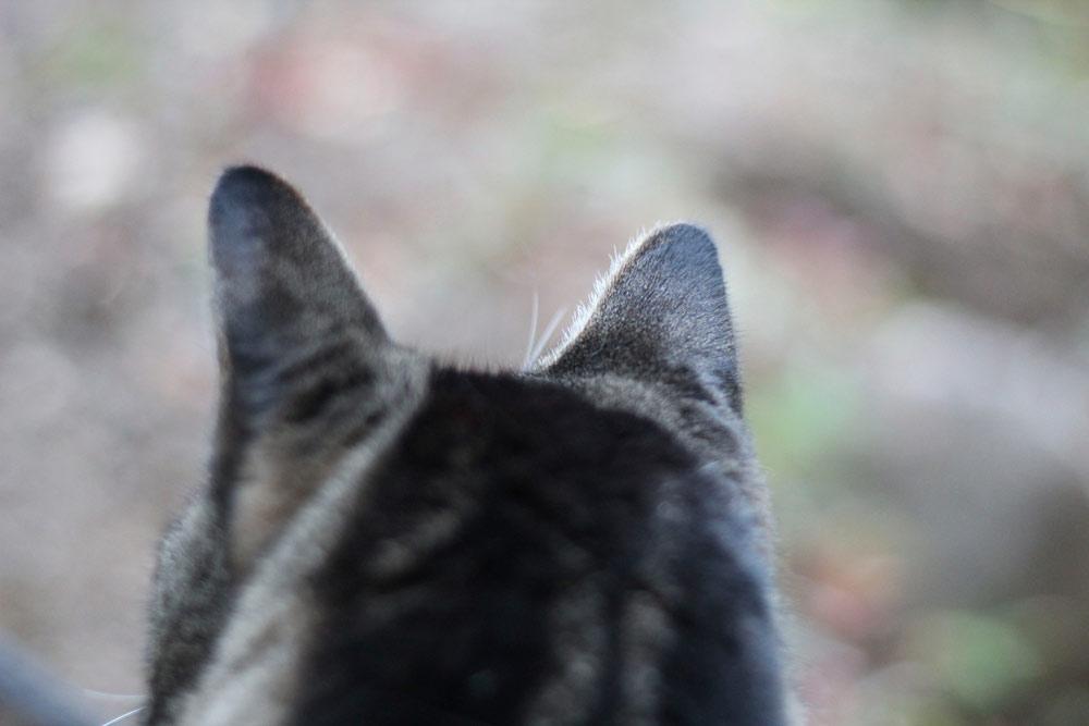8-tabs-cat-summer-2015