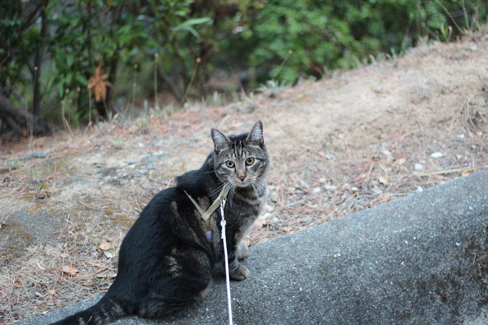 9-tabs-cat-summer-2015