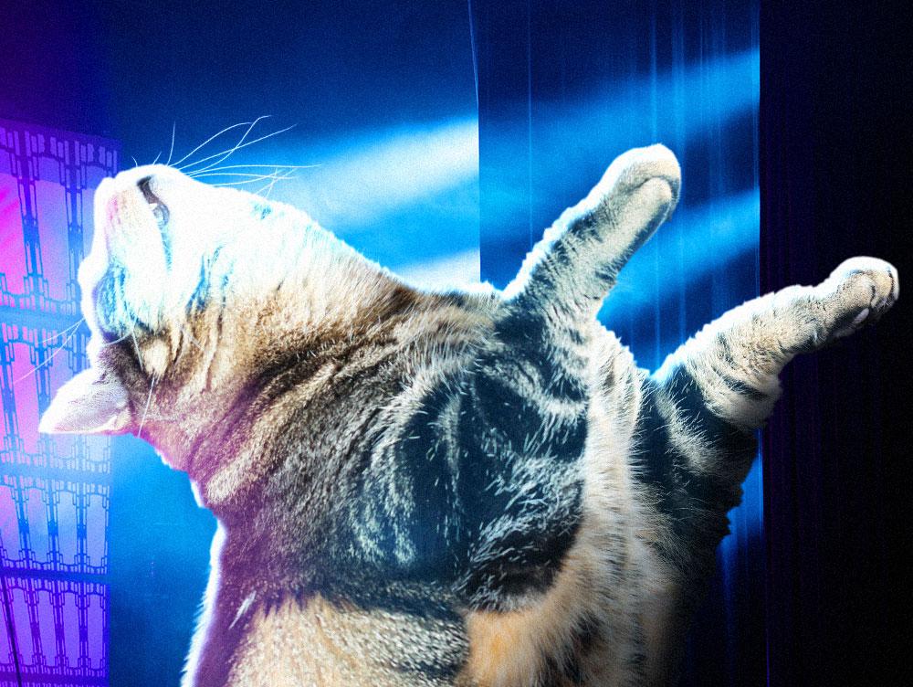 tabs-cat-model-laser-smoke
