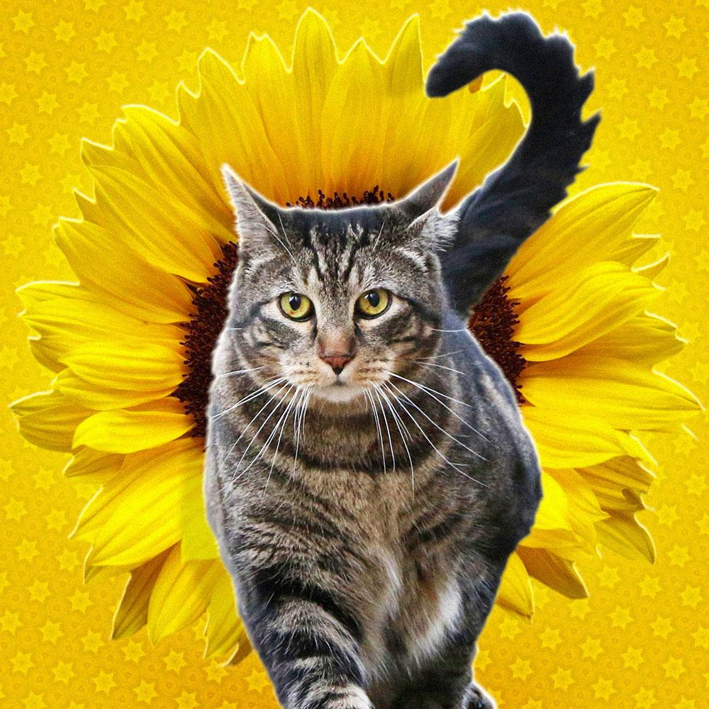 tabs-cat-model-sunflower
