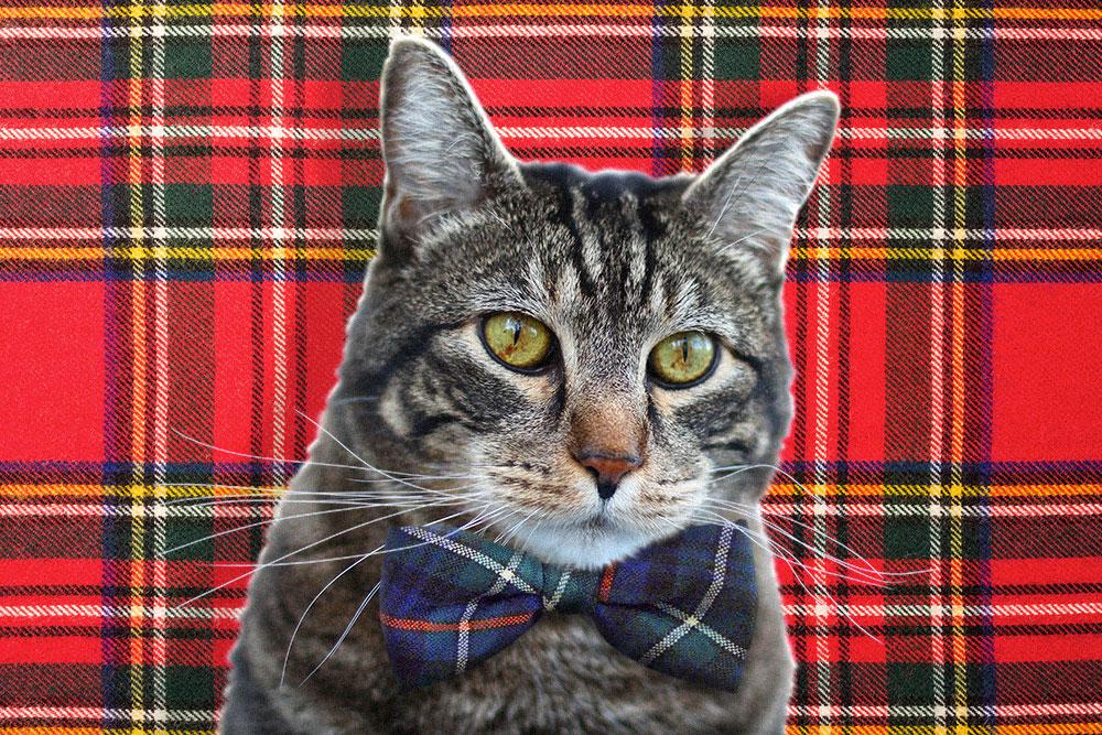 tabs-cat-model-tartan
