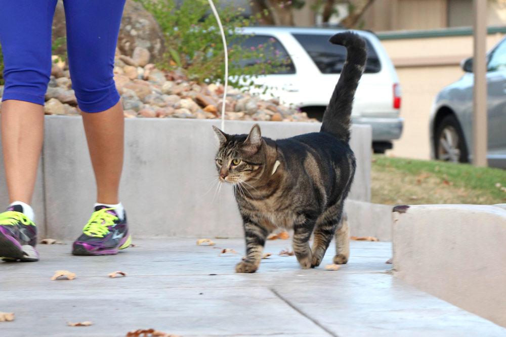 1-tabs-cat-model