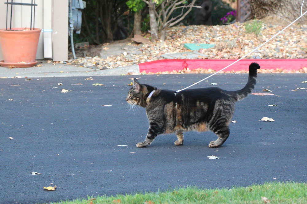 13-tabs-cat-model