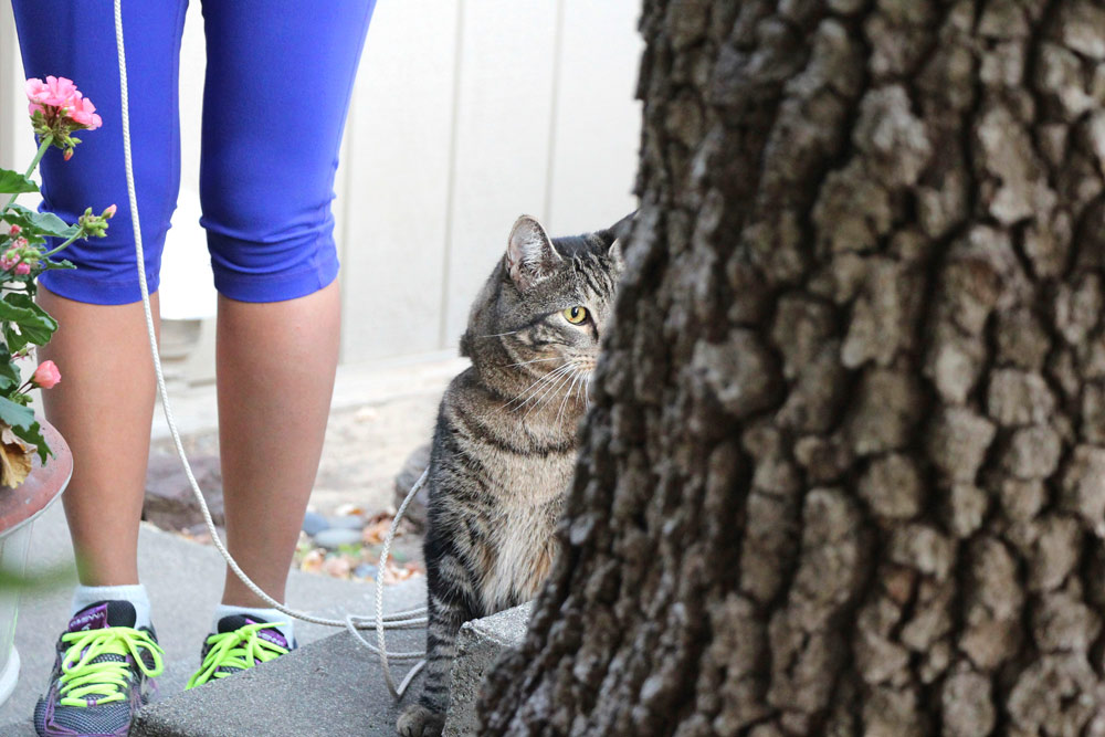15-tabs-cat-model
