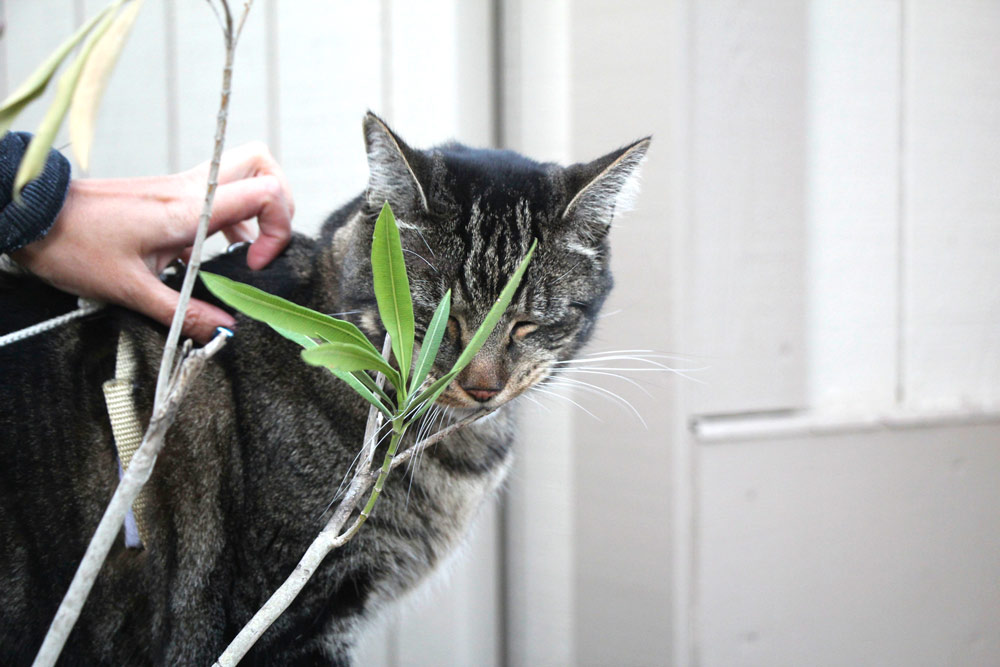 16-tabs-cat-model