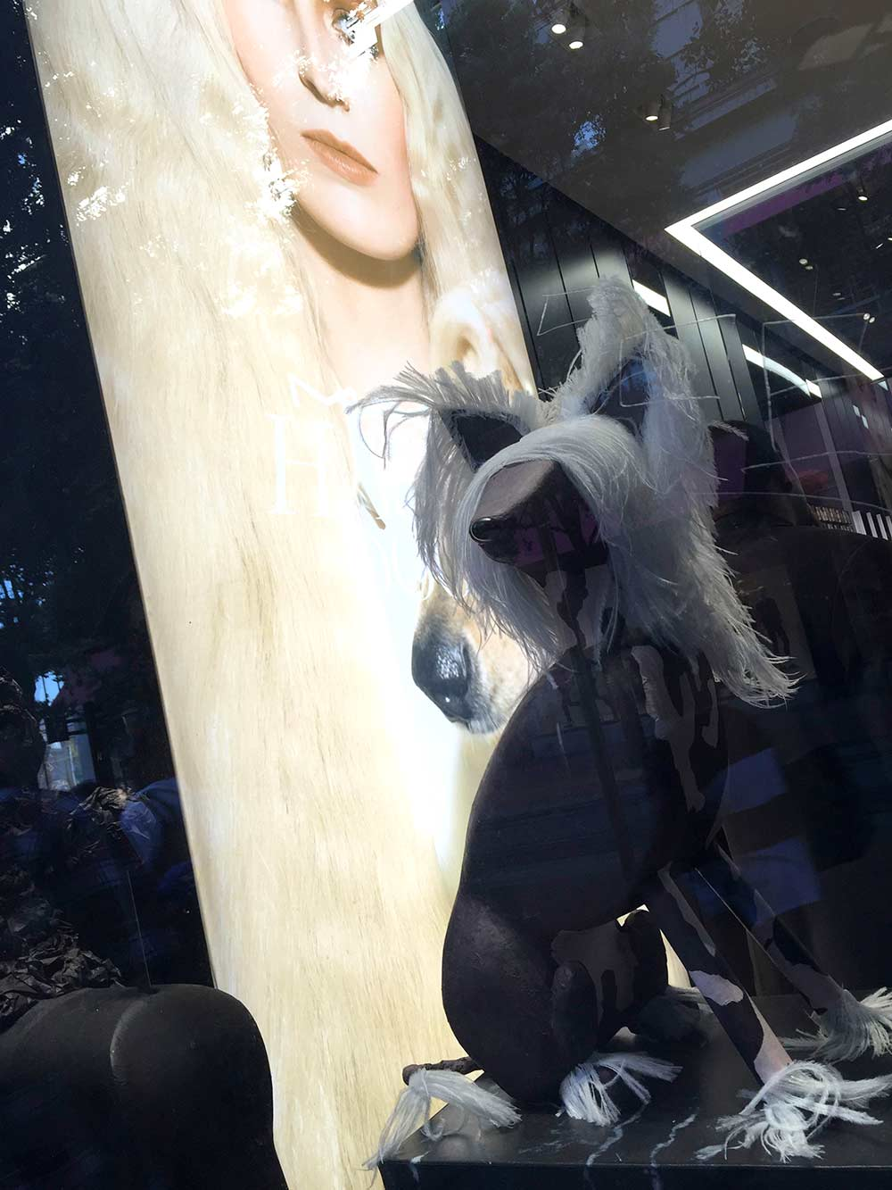 mac haute dogs display