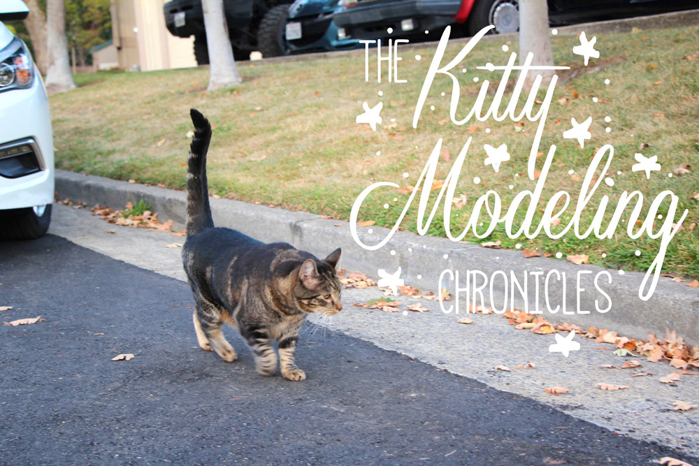tabs-kitty-modeling-chronicles-1