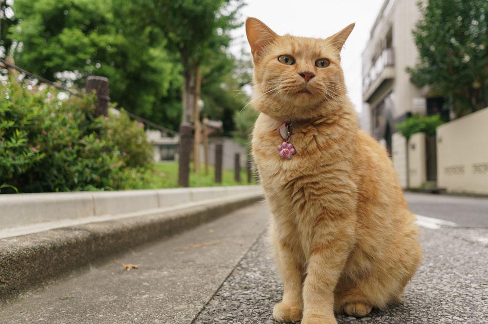 tabs-orange-cat-1
