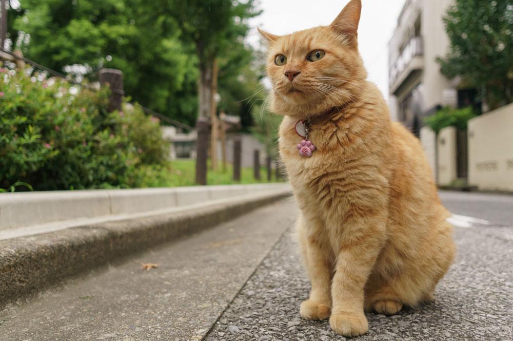 tabs-orange-cat-2