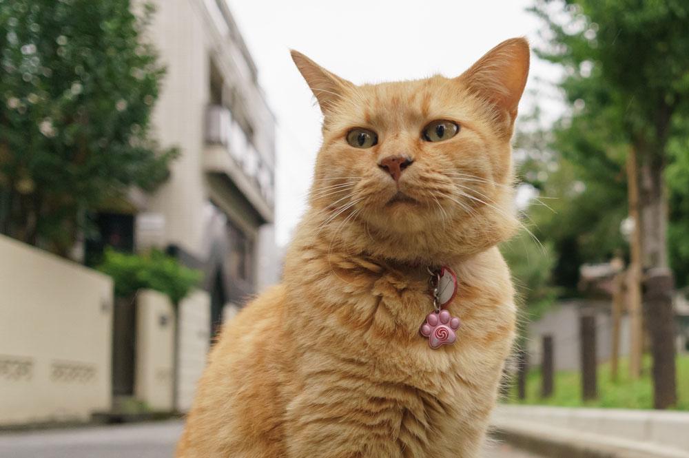 tabs-orange-cat-3