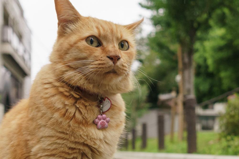 tabs-orange-cat-4