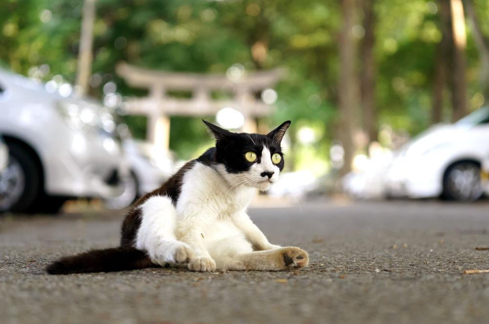 tabs-tuxedo-cat-1
