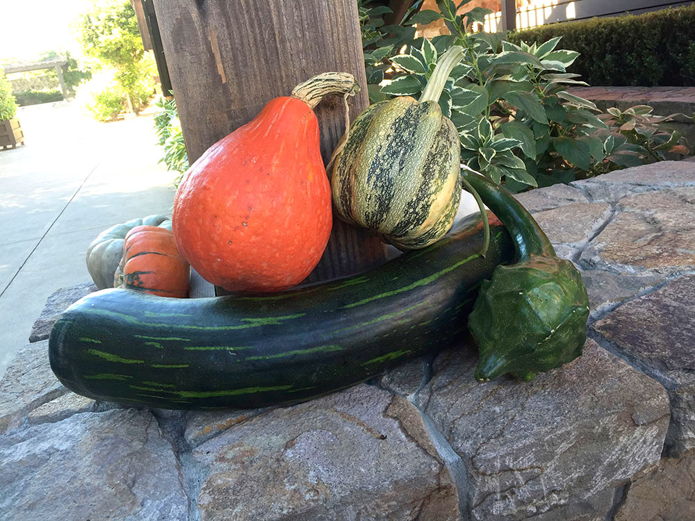 youngville gourds