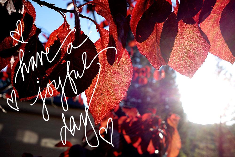 monday poll autumn leaves