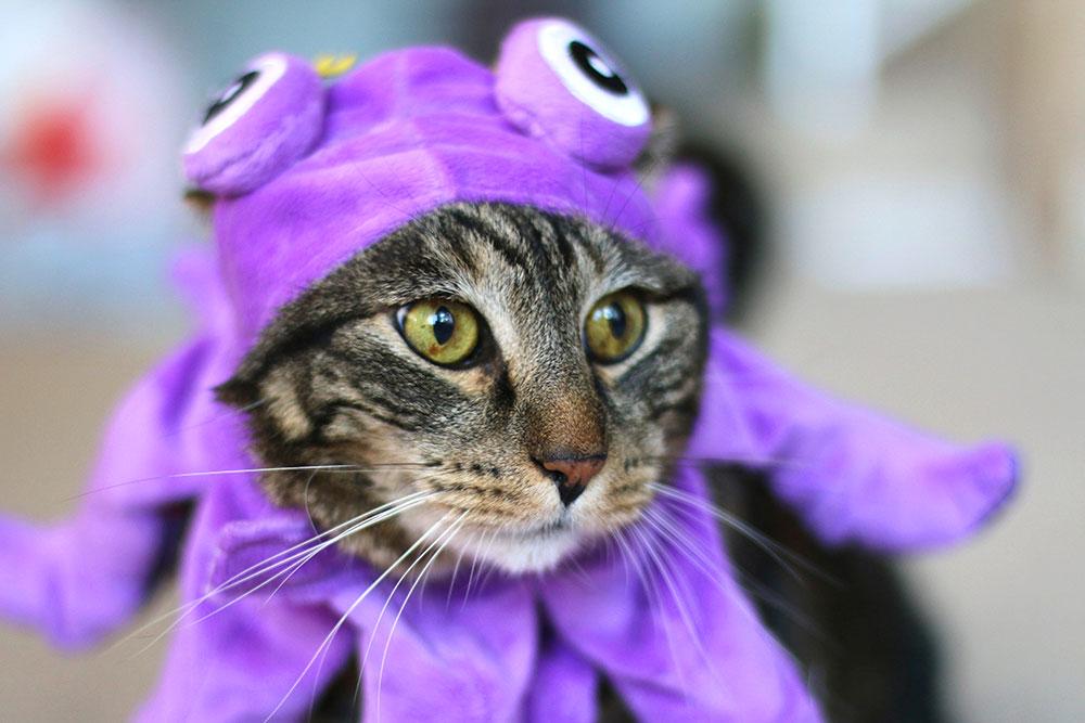 3-tabs-halloween-cat-costume