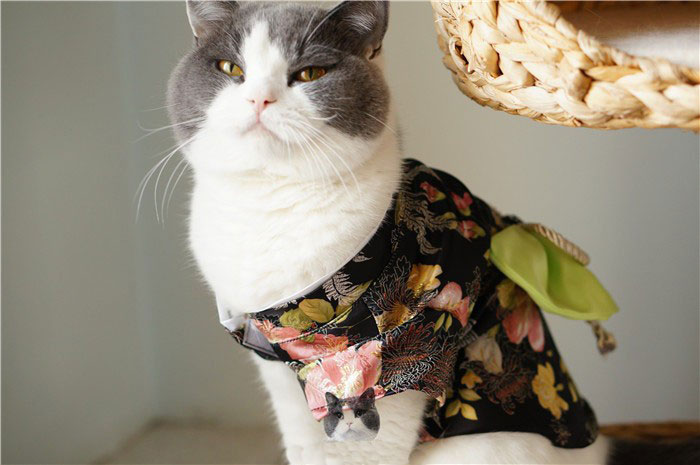 4-cat-kimono-costume
