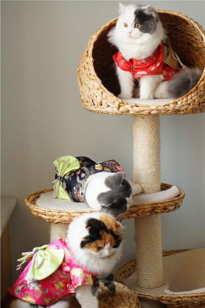 5-cat-kimono-costume