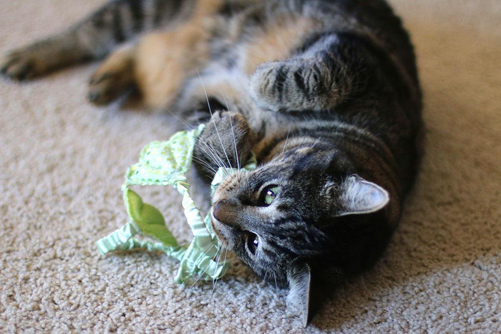 6-tabs-halloween-cat-costume