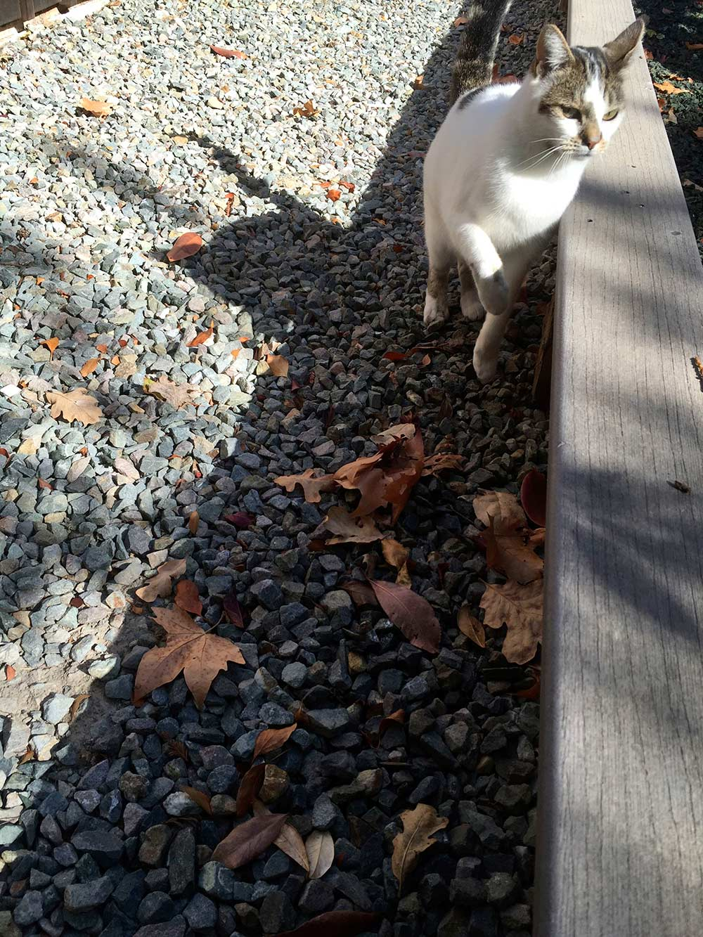 sunshine the cat 3